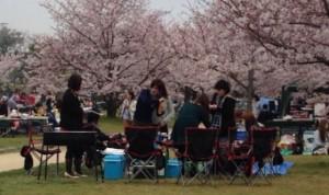 舞鶴公園 桜 バーベキュー