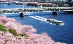隅田川 水上バス 桜