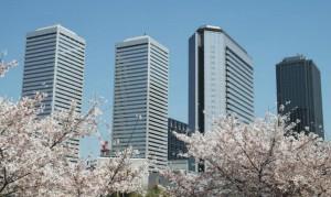 大阪 記念樹の森 桜