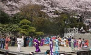 飛鳥山公園 桜まつり