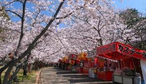 淀川河川公園背割堤地区 桜 屋台