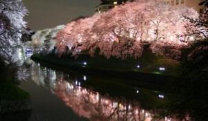 隅田公園 桜 ライトアップ