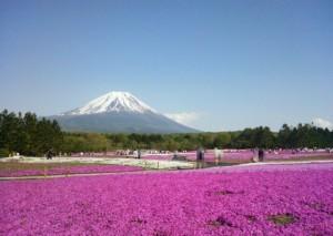 富士山と青空と芝桜