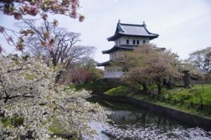 松前城 桜