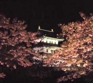 松前城と桜のライトアップ
