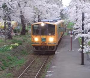 芦野公園 桜 走れメロス号