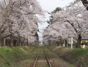 芦野公園 津軽鉄道 桜