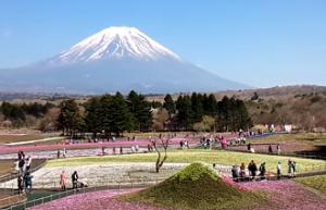 富士山と芝桜と観光客