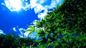 立夏 新緑と青空