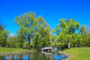 青空 公園