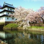 松前公園の桜2019の見頃と開花予想!桜の種類やライトアップ時間は?