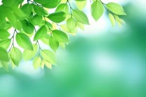 立夏 新緑