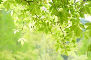 新緑 日差し