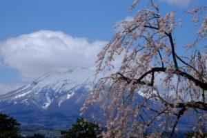 弘前公園 桜 岩木山