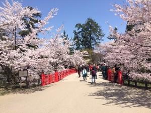 弘前公園 桜まつり