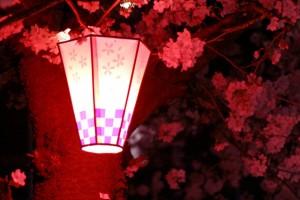 桜 ライトアップ ぼんぼり