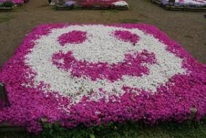 羊山公園 芝桜 スマイル