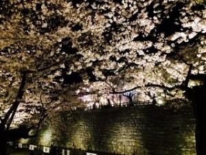 弘前公園 桜 ライトアップ