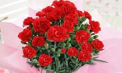 母の日 花束 赤いカーネーション
