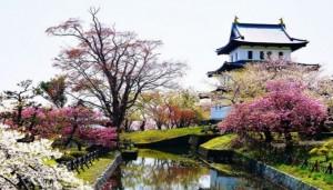 松前城 桜 コラボ
