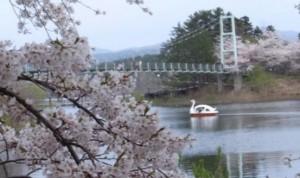 芦野公園 桜 ボート