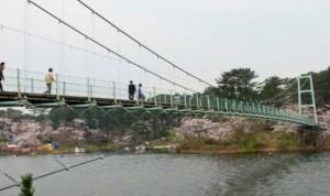 芦野公園 吊橋 桜