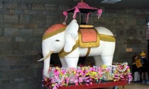 花祭り 白い象