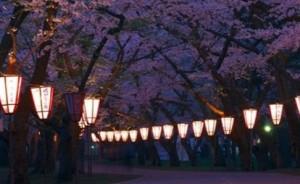 金木桜まつり ライトアップ