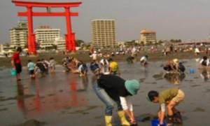 潮干狩り 弁天島