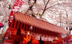 金木桜まつり 屋台