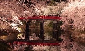弘前さくらまつり 桜 ライトアップ