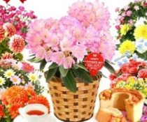 花鉢 スイーツ 母の日