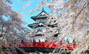 弘前公園 桜 見頃