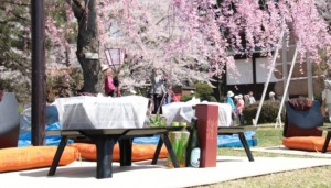 弘前公園 手ぶらで観桜会