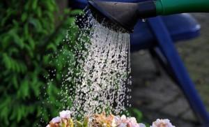 植物 水やり