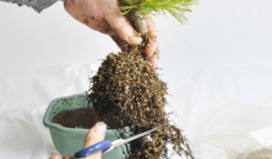 植物 植え替え