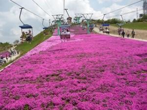 茶臼山 芝桜 リフト