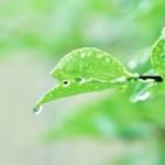 走り梅雨の意味。時期はいつ頃?天気の状態は?俳句について。