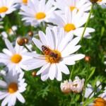 蜂よけ対策。グッズやスプレーの効果。ベランダから駆除方法。