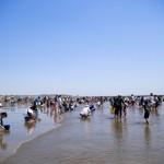 二色の浜の潮干狩り2017。干潮の時間帯は?駐車場と混雑状況。