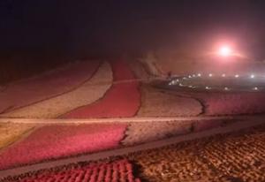 茶臼山 芝桜 ライトアップ