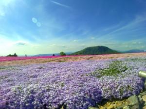 茶臼山 芝桜 青空