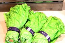 面白い 野菜