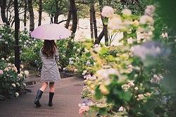 雨の日 傘