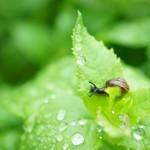 雨 カタツムリ 葉