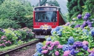 箱根あじさい電車