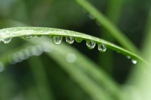 梅雨 雨のしずく