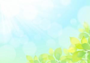 新緑 晴れ