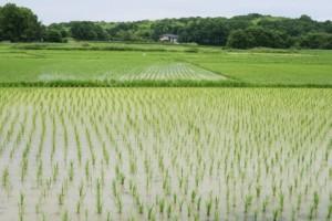 田んぼ 田舎の風景