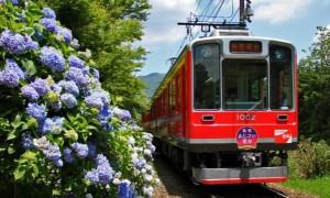 箱根電車 あじさい